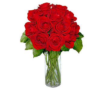 12 Short Stem Red Roses in Pleasanton TX, Pleasanton Floral