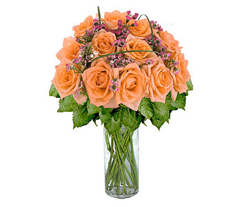 12 Peach Designer Long Stem Roses in Pleasanton TX, Pleasanton Floral