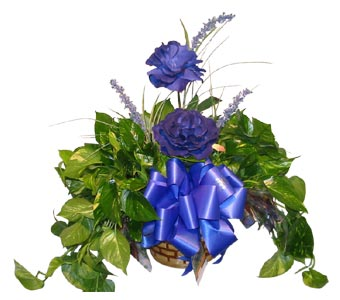 GP09 ''POTHOS IVY IN BLUE'' in Oklahoma City OK, Array of Flowers & Gifts