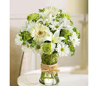 Serene Green in Bradenton FL, Ms. Scarlett's Flowers & Gifts