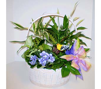 Breath of Spring Garden in Falmouth MA, Falmouth Florist 508-540-2020