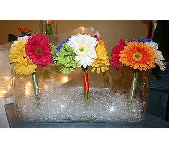 Bright Gerbera DaisiesPlease call for more info 888-279-7845 in Manotick ON, Manotick Florists