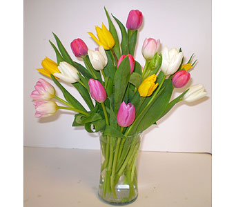 Medley of Tulips Vase in Falmouth MA, Falmouth Florist 508-540-2020