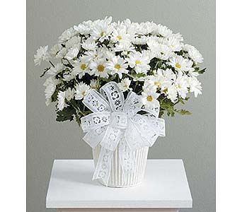 White Daisy Mum Plant in West Bloomfield MI, Happiness is...Flowers & Gifts