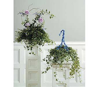 Ivy Rose Basket/Hanging Variegated Ivy in West Bloomfield MI, Happiness is...Flowers & Gifts