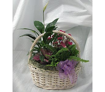 English Garden Basket in Crystal Lake IL, Countryside Flower Shop