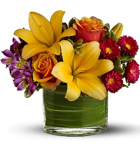 Teleflora's Blossoms of Joy in Orlando FL, Orlando Florist