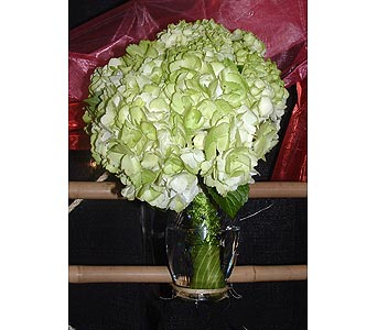 Green Hydrangeas in Worcester MA, Herbert Berg Florist, Inc.