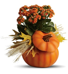 Teleflora's Harvest Pumpkin in Hendersonville TN, Brown's Florist
