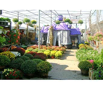 October/Halloween in Brooklyn NY, David Shannon Florist & Nursery