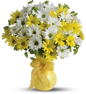 Teleflora's Upsy Daisy - Deluxe in Olean NY, Uptown Florist
