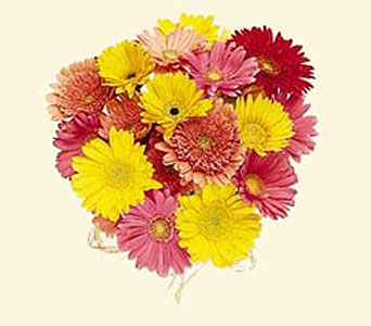 Mixed Gerbera Daisy Bouquet in New York NY, CitiFloral Inc.