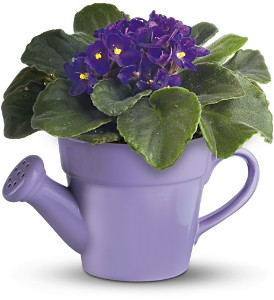 Teleflora's Spring Showers African Violet in Daly City CA, Mission Flowers