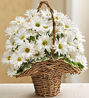 BASKET FULL OF DAISIES in Homer NY, Arnold's Florist & Greenhouses & Gifts