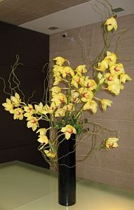Orchid Money Tree in Guelph ON, Patti's Flower Boutique