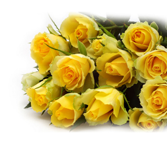 12 Yellow Roses (wrapped) in Calgary AB, All Flowers and Gifts