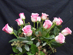 One dozen pink roses in Chapel Hill NC, Floral Expressions and Gifts