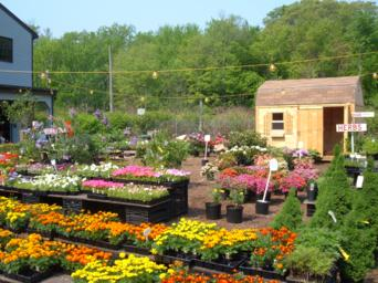 annuals and perennials in Weymouth MA, Hartstone Flower, Inc.