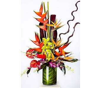 Tropical Chic in Bradenton FL, Ms. Scarlett's Flowers & Gifts