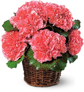 Carnation Expression in Wake Forest NC, Wake Forest Florist