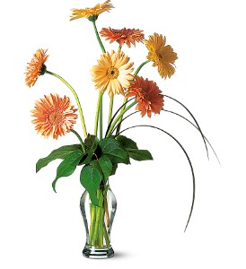 Grand Gerberas in Ottumwa IA, Edd, The Florist, Inc