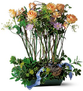 Rose Topiary in Fredonia NY, Fresh & Fancy Flowers & Gifts