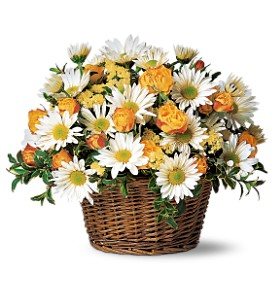 Joyful Roses and Daisies in Belford NJ, Flower Power Florist & Gifts