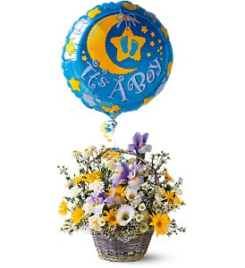 It's a Boy! Basket in Sayville NY, Sayville Flowers Inc