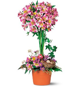 Alstroemeria Topiary in Broomall PA, Leary's Florist