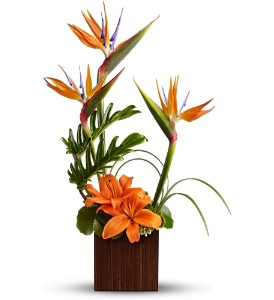 Teleflora's Bamboo Paradise in Chapel Hill NC, Floral Expressions and Gifts