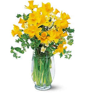Charming Daffodils in Orange CA, Main Street Florist