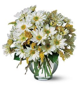 Daisy Cheer in Manhasset NY, Town & Country Flowers