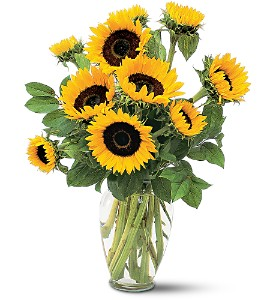 Shining Sunflowers in Derry NH, Backmann Florist