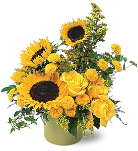 A Pot of Sunflowers in Winnipeg MB, Cosmopolitan Florists