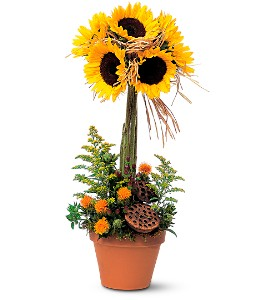 Sunflower Topiary in Bakersfield CA, White Oaks Florist