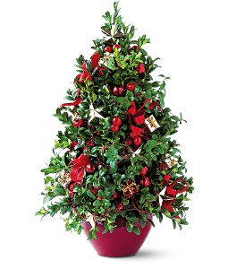 Boxwood Tree in Martinsburg WV, Bells And Bows Florist & Gift