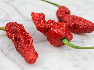 Hot Pepper, Bhut Jolokia Red in Waukegan IL, Larsen Florist
