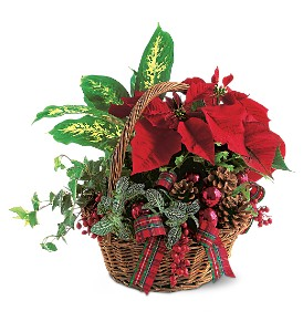 Holiday Planter Basket in Amherst NY, The Trillium's Courtyard Florist