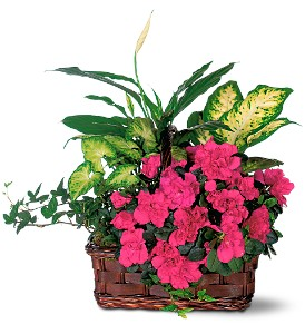 Azalea Attraction Garden Basket in San Clemente CA, Beach City Florist