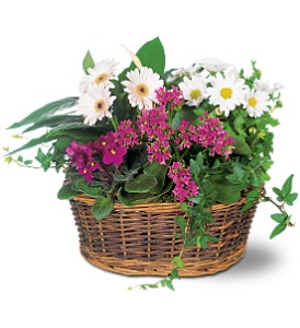 Traditional European Garden Basket in Rocky Point NY, Flowers on Broadway