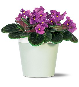 Purple African Violet in Metropolis IL, Creations The Florist