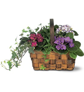 Mixed African Violet Basket in Woodland Hills CA, Abbey's Flower Garden