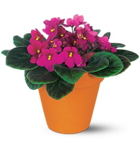 Vivacious Violets in Perry Hall MD, Perry Hall Florist Inc.
