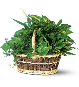Large Basket Garden in Wellington FL, Wellington Florist