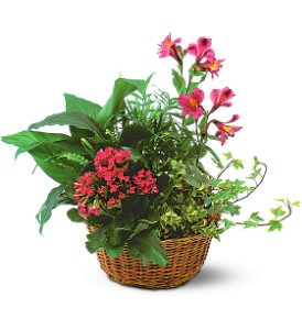 Dish Garden with Pinks in Evansville IN, Cottage Florist & Gifts