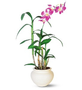 Dendrobium Orchid in Wilmington MA, Designs By Don Inc