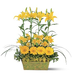 Yellow Garden Rows in Wantagh NY, Numa's Florist
