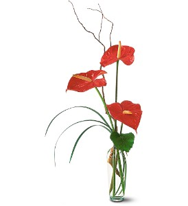 The Simplicity of Anthuriums in New York NY, CitiFloral Inc.
