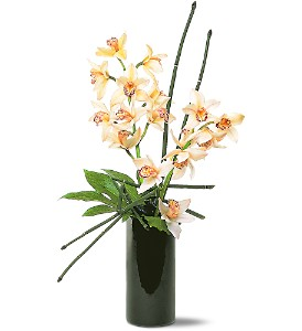 Artful Orchids in Ottumwa IA, Edd, The Florist, Inc