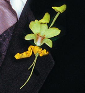 Cat's-Eye Green Orchid Boutonniere in Etobicoke ON, Alana's Flowers & Gifts